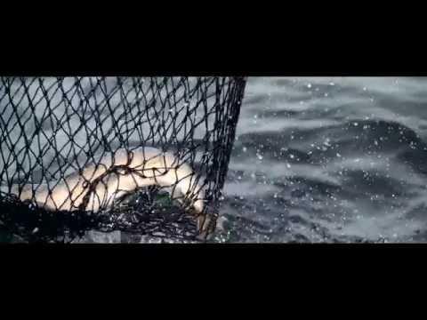 Team 13 - Muse Gold Rods Millwaukee Harbor