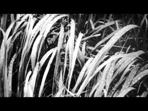 Ansel Adams 1958 HD Documentary
