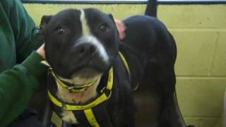 Dogs Trust Darlington: Buster