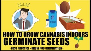 Germinating Cannabis Seeds - How to grow marijuana course for dummies - Growing Cannabis Indoors 101
