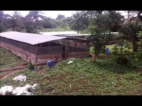A day in the life of a pig farmer in Africa Part 1