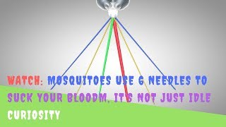 WATCH: Mosquitoes Use 6 Needles To Suck Your Bloodm, It's not just idle curiosity