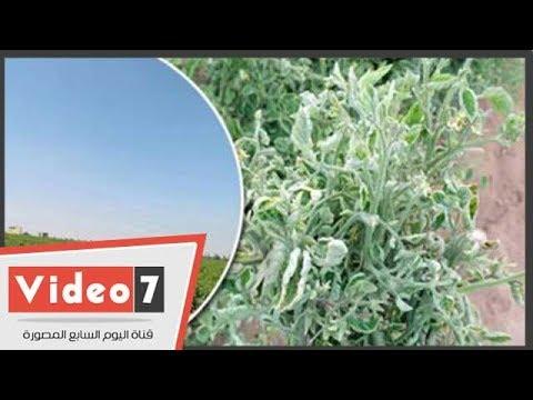 الزراعة: جار التحقق ولن نتهاون بحق المزارعين  - 22:54-2018 / 10 / 2