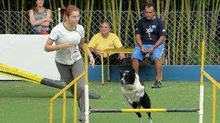 Como Treinar Seu Cão. Aligity é Tudo De Bom!