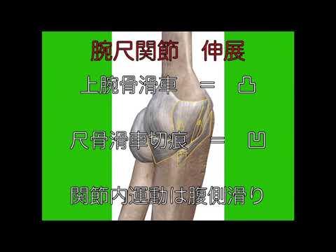 腕尺関節伸展(中学校理科+中学校体育)