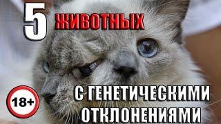 5 Шокирующих Мутаций Животных 1 часть