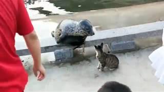 Морской котик и кот