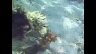 видео Отзывы об отеле » Hilton Nuweiba Coral Resort (Хилтон Нувейба Корал Ресорт) 4* » Нувейба » Египет , горящие туры, отели, отзывы, фото