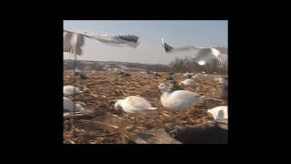 2010 Spring Snow Goose Hunting - Squaw Creek National Wildlife Refuge outside Mound City, Missouri