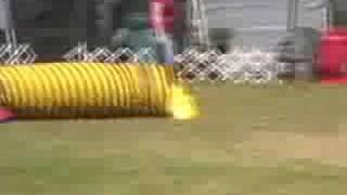 Canine Agility Trial (tunnel Round) In Port Gamble, July 08