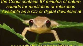 SOUNDS OF THE RAINFOREST---SERENADE OF THE COQUI