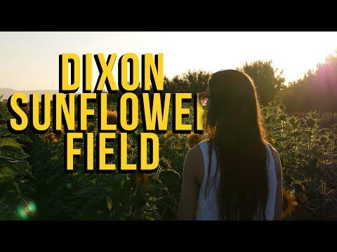 Exploring a Sunflower Field- Dixon CA (Gh5 Test)