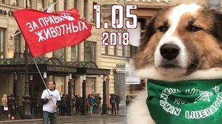 Марш за права животных. 1 мая 2018. Санкт-Петербург (Снято на iphone 7)