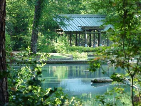 Our walk in Mercer Arboretum in Spring Texas