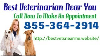 Best Emergency Veterinarian Near Me - 24 Hour Local Emergency Vet Hospital Near Me