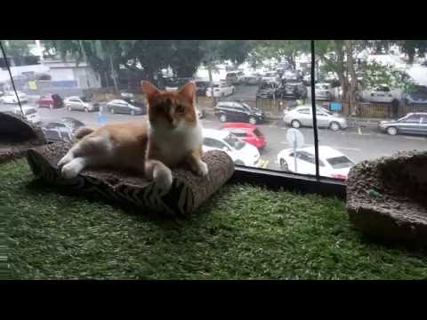 Visiting a Cat Cafe in Kuala Lumpur 1