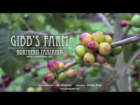 Gibb's Farm | Tanzania | Expert Africa