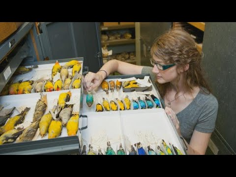 Meet the chief curiosity correspondent at Chicago Field Museum