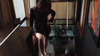 冬の観葉植物 和室・洋室どちらでもOK! thumbnail