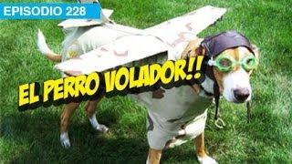 El Perro Volador! l whatdafaqshow.com