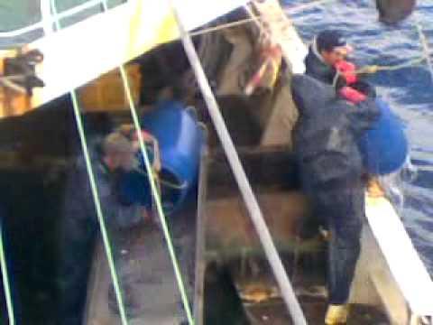 eels Catch on new zealand waters