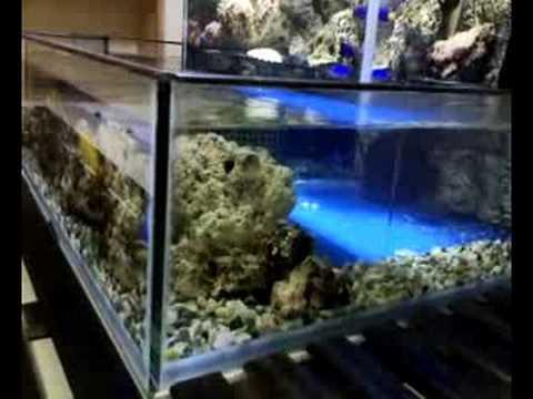 my creation marine fish open bottom tank youtube