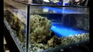 My Creation Marine Fish Open Bottom Tank