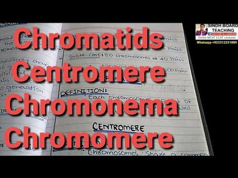 Chromatids, Centromere, Chromonema, Chromomere