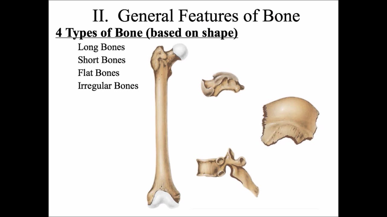 classification of bones Have a go at this quiz to see how much you already know about bones, types of bones and joints it does not matter if you do not know the answer, just see how f.
