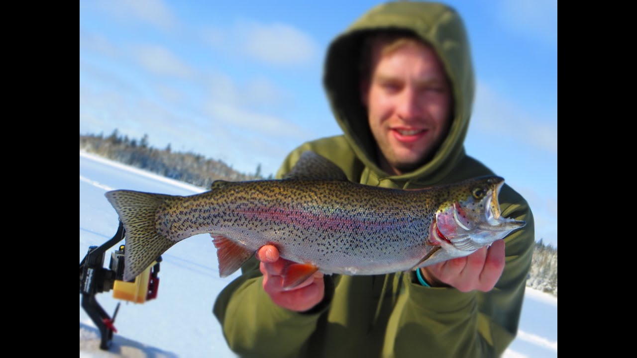 Ice fishing rainbow trout in northern minnesota youtube for Trout fishing mn season
