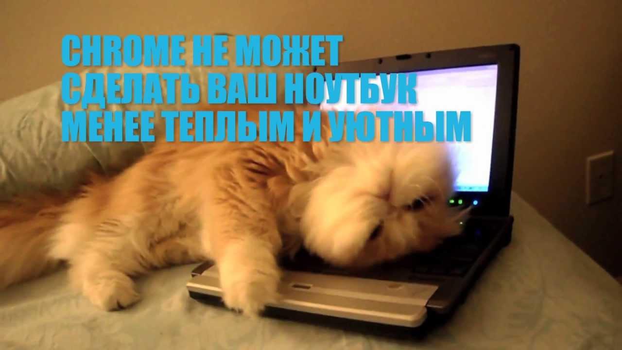 Google Chrome: кот
