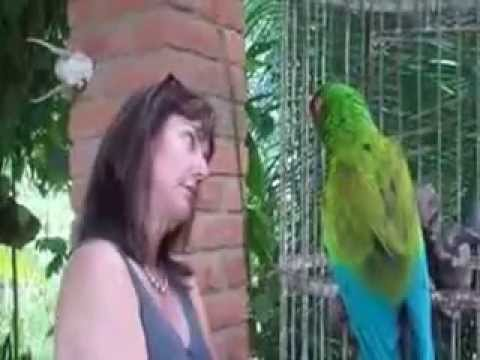 Parrot says hello- Parrot software - parrot for adoption - parrot adoption - parrot care