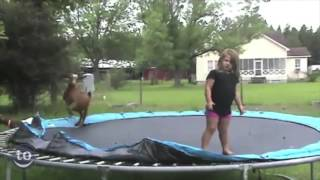 "Animals Jumping On Trampolines Remixed Using ""kik-start"" By Wwmt"