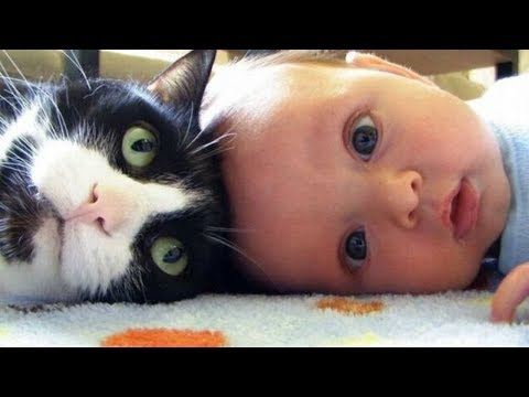 Baby and Cats Funny Compilation