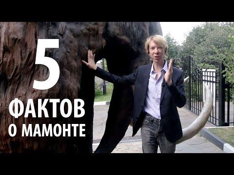 Топ 5 новых фактов о мамонте! Ярослав Попов | Палеонтологические истории