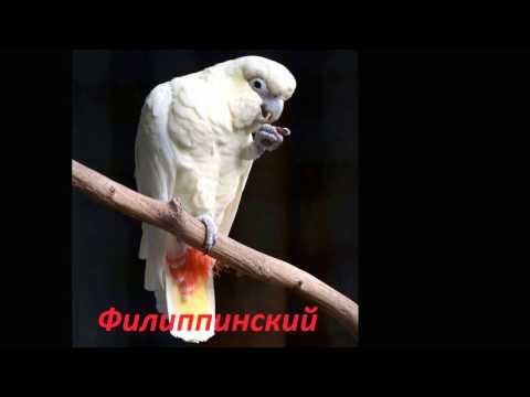 Виды попугаев первая часть.Семейство КаКаду