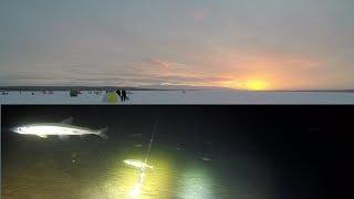 Зимняя рыбалка 2019 на озере Winter fishing 2019 on the lakeHD 2019
