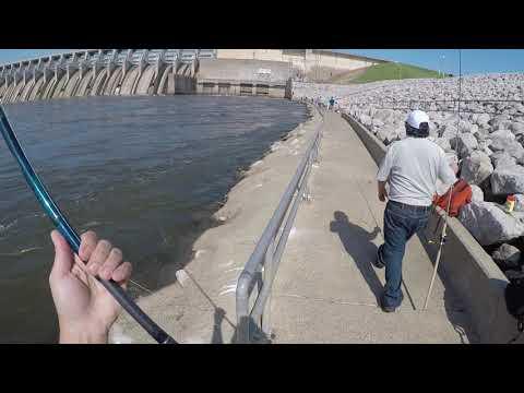 First 5 Casts Striper Fishing Below Keystone Dam Oklahoma