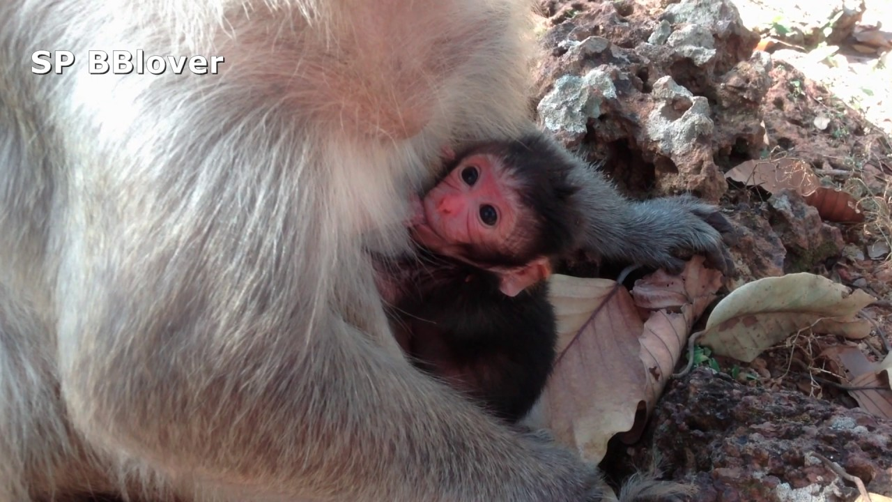 monkey dating woman
