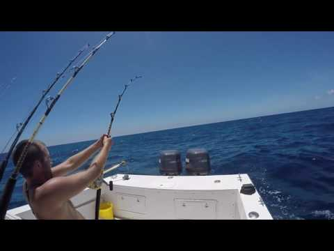 Blue Marlin fishing on the Reel Teaser