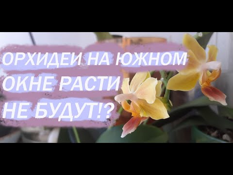 Орхидеи на ЮГЕ. Почему не будут расти?! БУДУТ - ЕЩЁ КАК! :)