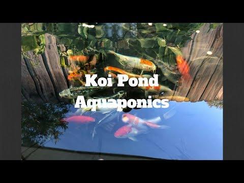 Koi Pond Aquaponics & NFT Update