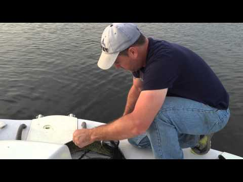 Fishing on Trent river for Pike