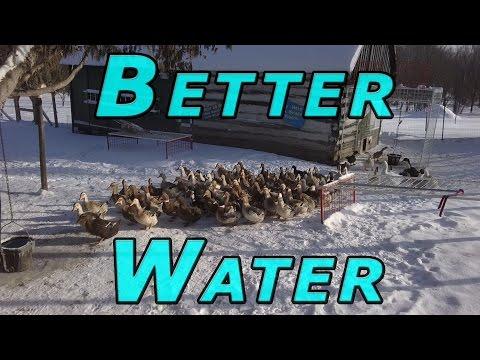 Duck Extraction Today #18 Ducks & Winter 2016-17