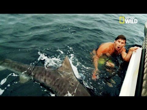 Un baigneur surpris par un requin tigre youtube - Photo de requin tigre a imprimer ...