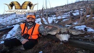 vq giant late season mule deer