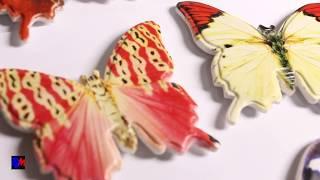 Бабочки из полистоуна   Обзор  Магниты на холодильник