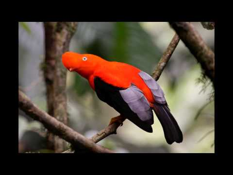 Colorful Exotic Birds