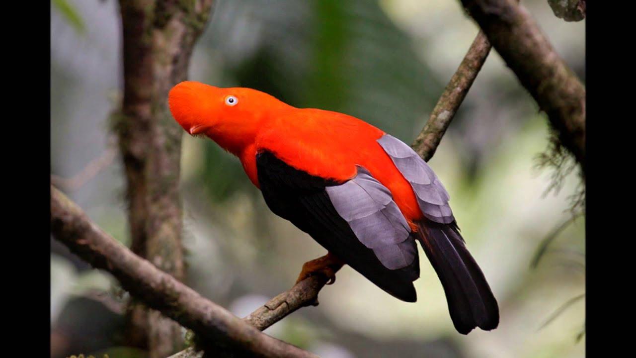 Bird Pictures Amazing Birds: Colorful Exotic Birds