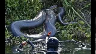 Repeat youtube video Самая большая змея в мире найденна живой!!! НОВОЕ 2014!!!